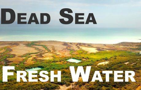 Ein Tzukim: The Secret of the Dead Sea