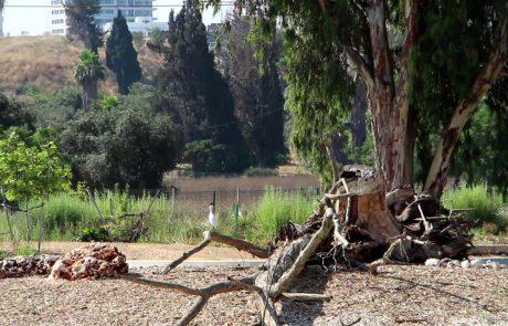 Restoring Tel Aviv's Yarkon River / Rosh Tzipor Forest