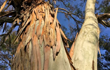 Trees Rooted in Tel Aviv's History